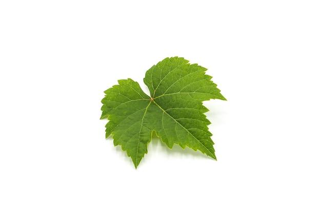 Folha de uva verde isolada no branco Foto Premium