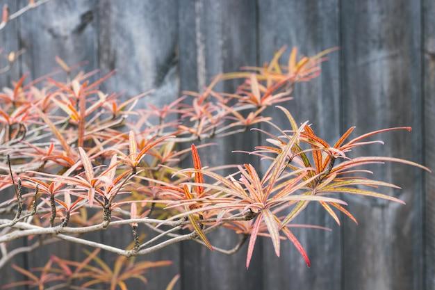 Folha outono, e, planta, ligado, escuro, celeiro, madeira Foto Premium