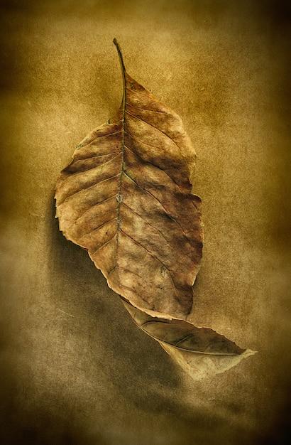 Folha seca de outono Foto Premium