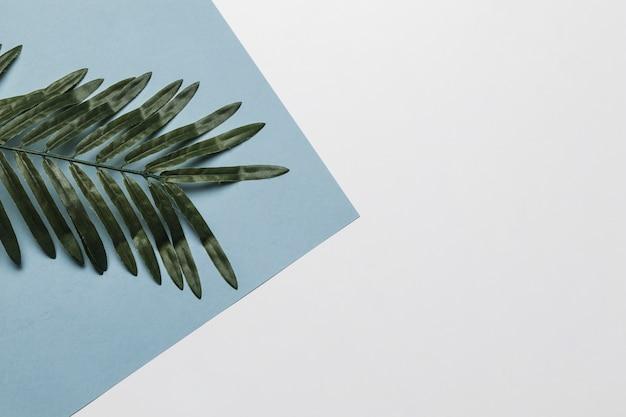 Folha tropical para spa com copyspace Foto gratuita