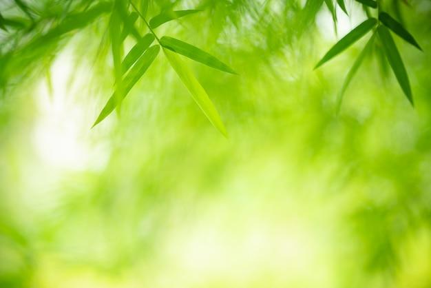 Folha verde com espaço da cópia usando-se como a natureza do fundo ou do papel de parede. Foto Premium