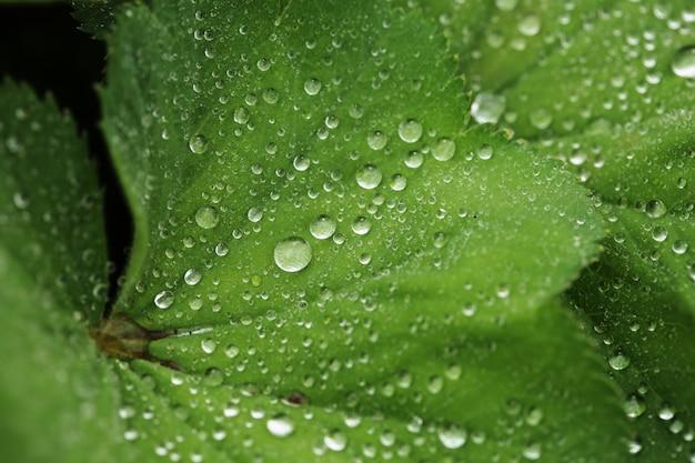 Folha verde com gotas de água Foto Premium