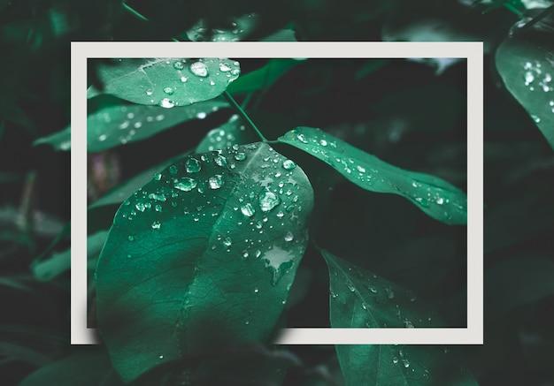 Folha verde com orvalho e quadro branco no fundo escuro da natureza. Foto Premium