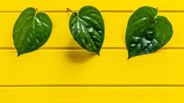 Folha verde do betle do gaiteiro na madeira amarela. Foto Premium