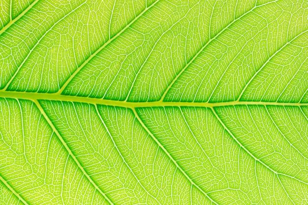 Folha verde, padrão, textura, fundo Foto Premium