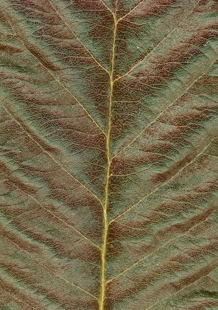 Folha verde vermelha Foto gratuita