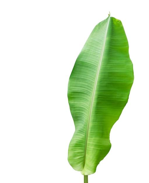 Folhagem de bananeira isolada no branco Foto Premium