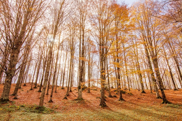 Folhagem no parque nacional monti simbruini, lazio, itália. Foto Premium