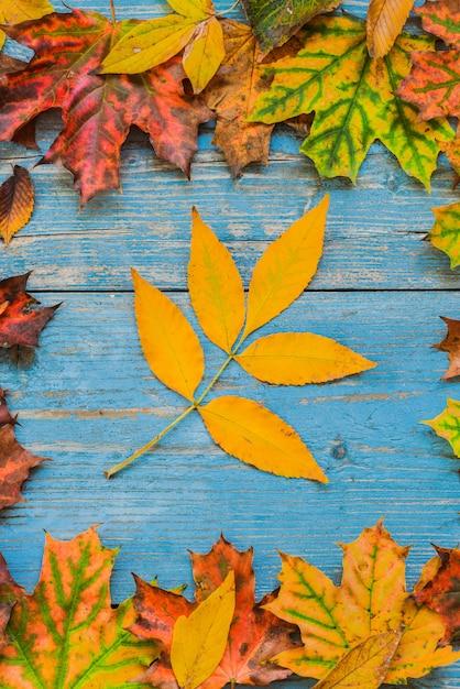 Folhas amarelas do outono em de madeira azul velho. Foto Premium
