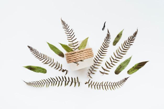 Folhas amarradas com barbante isolado no fundo branco Foto gratuita