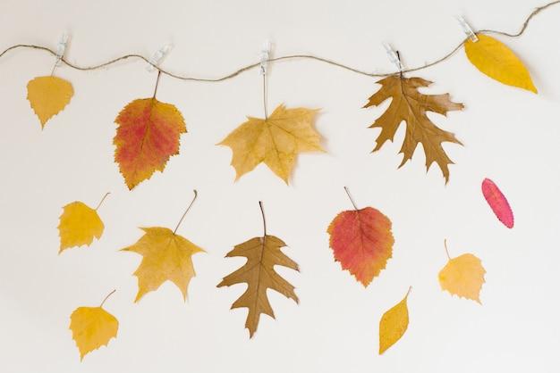 Folhas caídas de outono pendurar em uma corda com prendedores de roupa em um bege claro Foto Premium