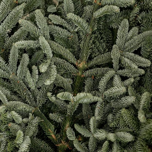 Folhas congeladas de pinho verde close-up Foto gratuita