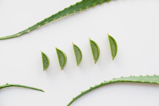 Folhas de aloe vera para tratamento de beleza Foto gratuita
