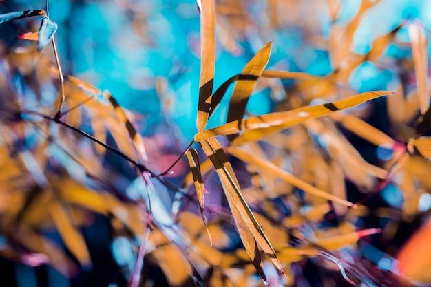 Folhas de bambu botânico Foto gratuita
