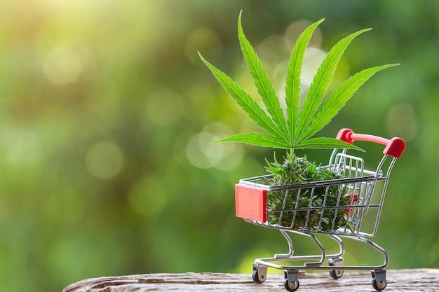 Folhas de cannabis e brotos colocados em um carrinho de compras Foto gratuita