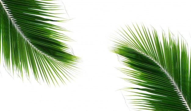 Folhas de coco de palma de gêmeos no fundo branco Foto Premium