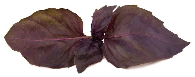 Folhas de erva de manjericão vermelho fresco. Foto Premium