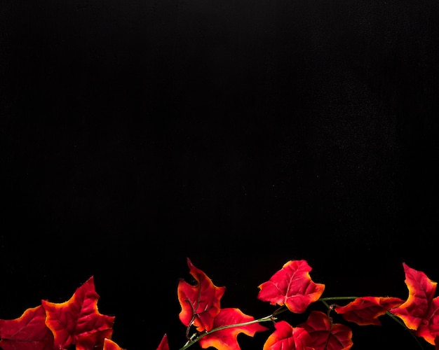 Folhas de hera vermelha colocadas na parte inferior do fundo preto Foto gratuita