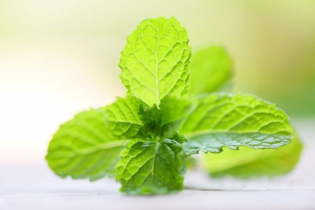 Folhas de hortelã fresca Foto Premium