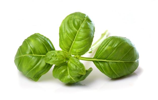 Folhas de manjericão Foto Premium