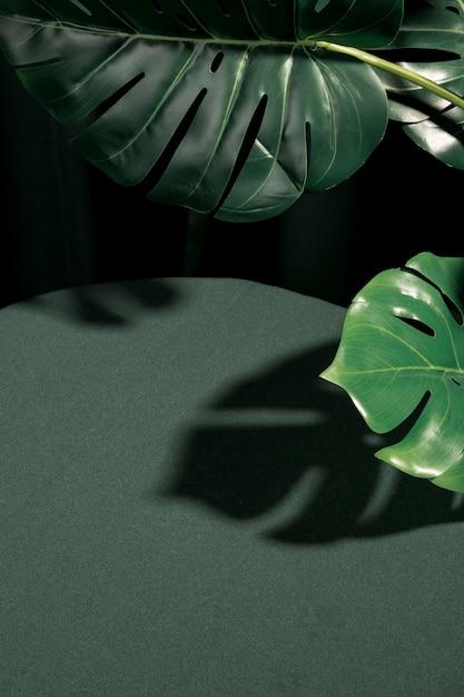 Folhas de monstera alto ângulo Foto gratuita