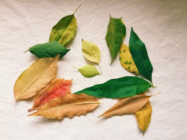 Folhas de outono coloridas isoladas em uma superfície branca Foto gratuita