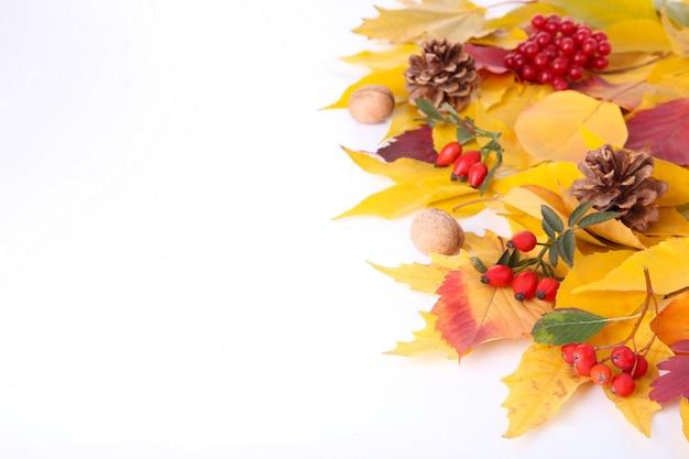 Folhas de outono com bagas isoladas no branco Foto Premium