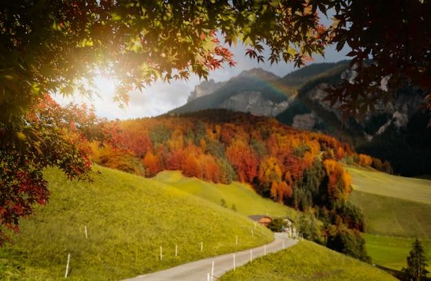 Folhas de outono com borrão na transilvânia Foto Premium