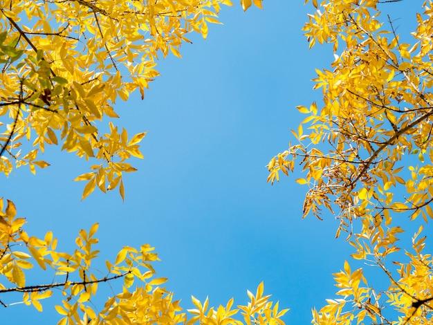Folhas de outono contra o céu azul Foto Premium