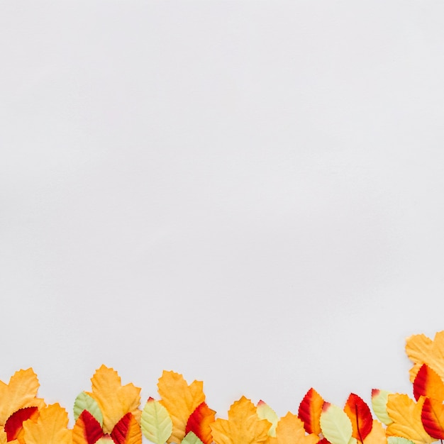 Folhas de outono na superfície branca Foto gratuita
