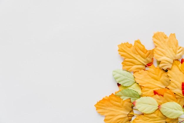 Folhas de outono no fundo branco Foto gratuita