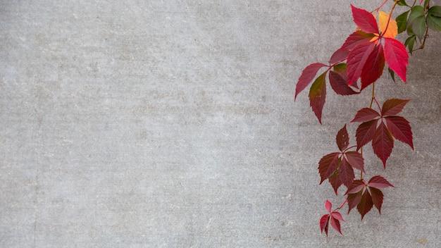 Folhas de outono ou queda em um fundo cinza. copyspace Foto Premium
