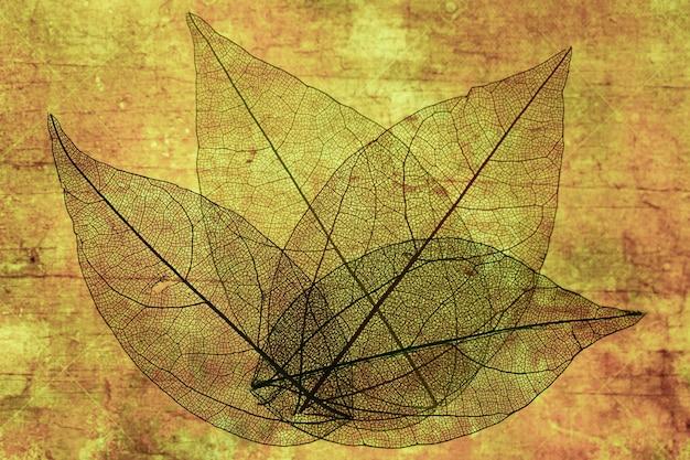 Folhas de outono transparentes abstratas Foto gratuita