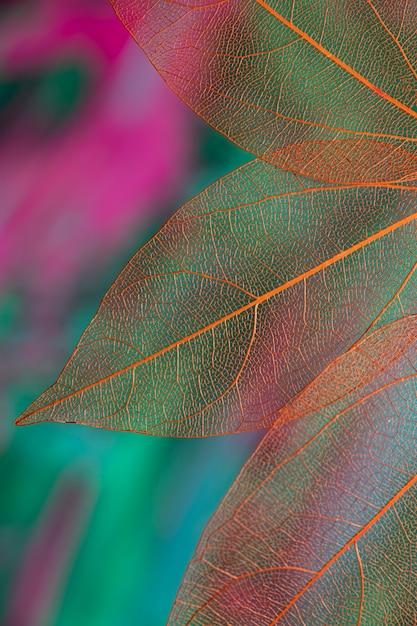 Folhas de outono transparentes coloridas vivas Foto gratuita