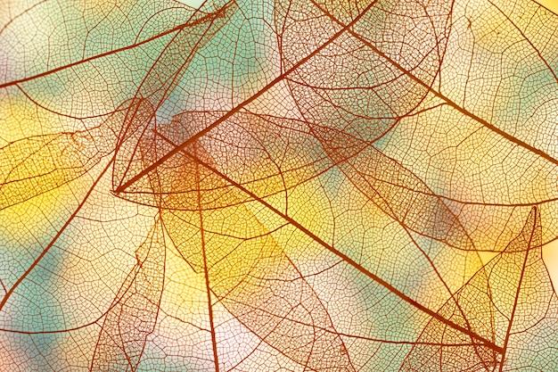 Folhas de outono transparentes vibrantes Foto gratuita