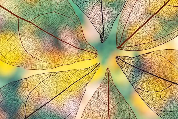 Folhas de outono transparentes vivas Foto gratuita