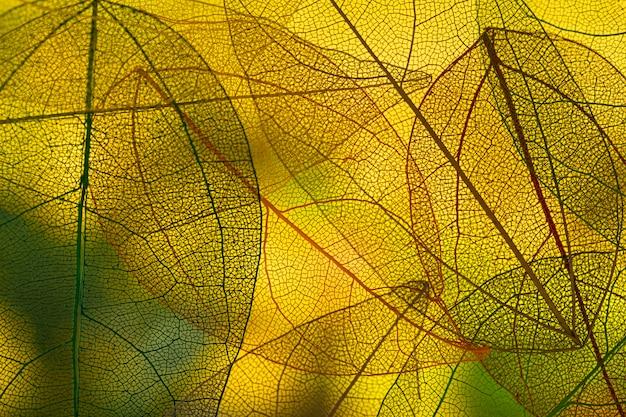 Folhas de outono verdes vibrantes Foto gratuita