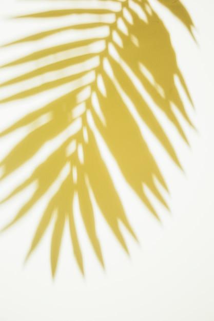 Folhas de palmeira amarela sobre fundo branco Foto gratuita
