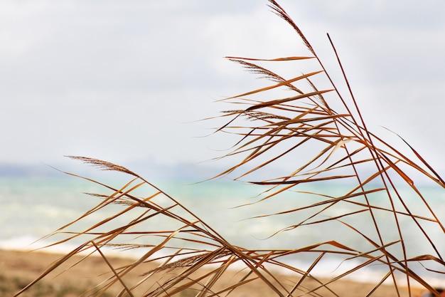 Folhas de palmeira contra um céu azul, praia arenosa e água do mar, antes de uma tempestade iminente. Foto Premium