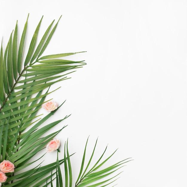 Folhas de palmeira em fundo branco com espaço de cópia Foto gratuita