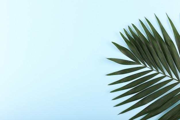 Folhas de palmeira em papel colorido. clima de verão, tropical, em branco. Foto Premium