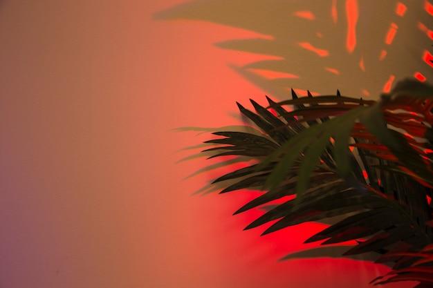 Folhas de palmeira fresca com sombra no pano de fundo colorido vermelho Foto gratuita