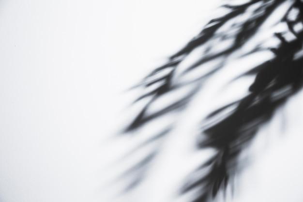 Folhas de palmeira instável sombra sobre fundo branco Foto gratuita