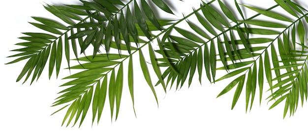 Folhas de palmeira isoladas Foto Premium