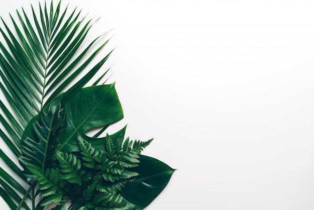 Folhas de palmeira tropical com espaço de cópia Foto Premium