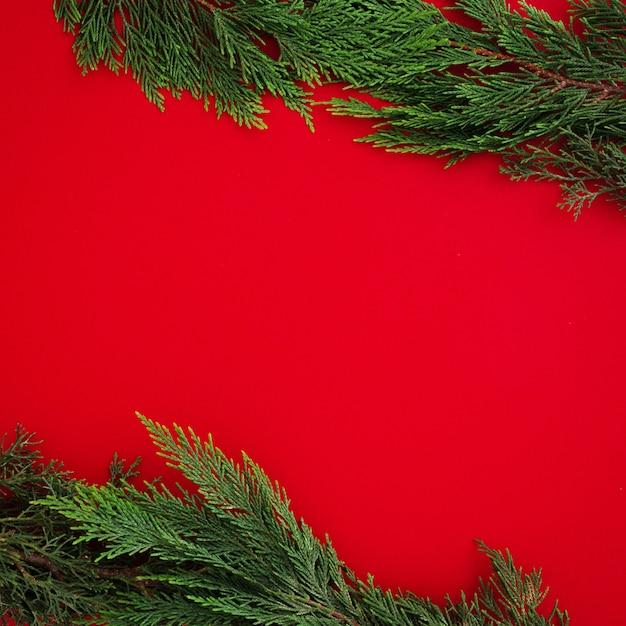 Folhas de pinheiro de natal em fundo vermelho com copyspace Foto gratuita