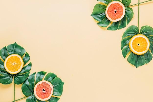 Folhas de plantas com citrinos fatiados Foto gratuita