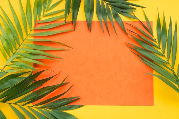 Folhas de plantas no quadro de papel laranja em branco sobre o fundo amarelo Foto gratuita