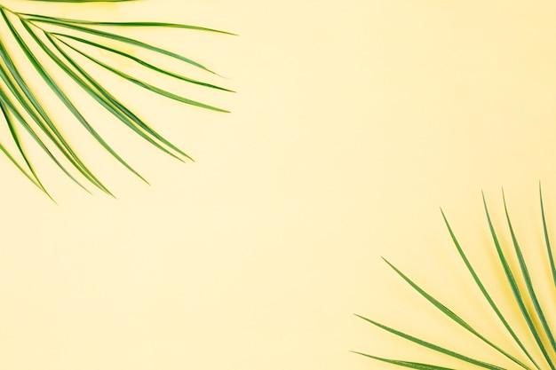 Folhas de plantas verdes frescas Foto gratuita