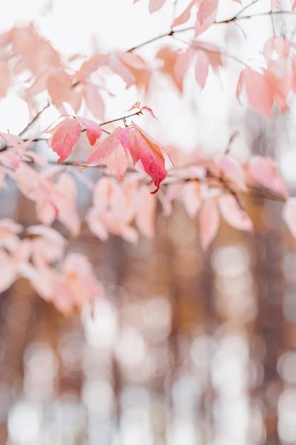 Folhas de rosa na natureza embaçada Foto Premium
